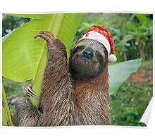 Christmas animal sloth wearing a santa hat Poster