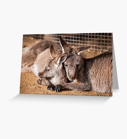Cuddling Kangaroos Greeting Card