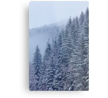 Snow-covered fir forest Metal Print