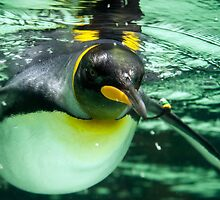 Emperor Penguin by Ray Warren