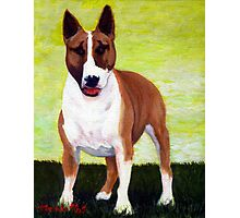 Bull Terrier Dog Portrait Photographic Print