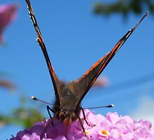 Butterfly & bush in harmony by Franglais