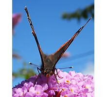 Butterfly & bush in harmony Photographic Print
