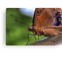 Brilliant Butterfly II Canvas Print