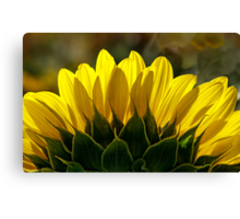 Mississinewa Sunflower Abstract by Mother Nature  Canvas Print