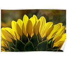 Mississinewa Sunflower Abstract by Mother Nature  Poster