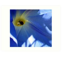 Morning Glory and Bee Art Print