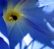 Morning Glory and Bee by Franglais