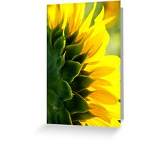 Sunkissed at Mississinewa Greeting Card