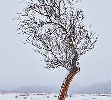 Lonely tree on snowy field by naturalis