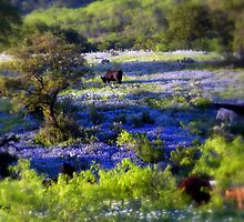 Grazing amongst the Bluebonnets, Texas by LeRoyM