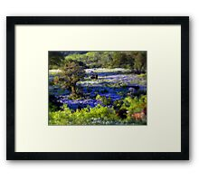 Grazing amongst the Bluebonnets, Texas Framed Print