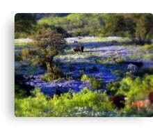 Grazing amongst the Bluebonnets, Texas Canvas Print