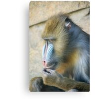 Magnificent Mandrill Canvas Print