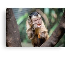 Cute Capuchin Monkey IV Canvas Print