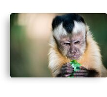 Monkey Munchies Canvas Print