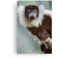 Lovely Lemur Canvas Print