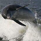 Bottlenose Dolphin by Brenda Dow