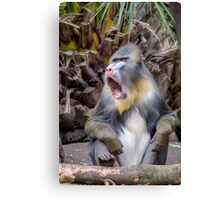 Magnificent Mandrill IV Canvas Print