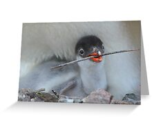 Gentoo Chick Greeting Card