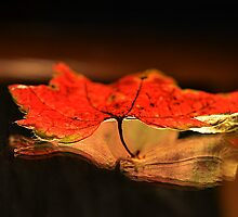 Floating Fallen Leaf by anothercreator2