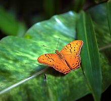 Orange Butterfly II by Ray Warren