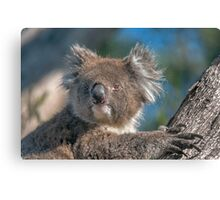 Cute Koala II Canvas Print