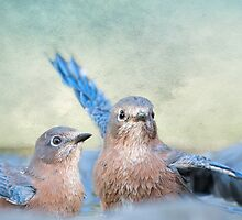Bathing Bluebird Beauties by Bonnie T.  Barry