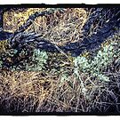 Lichen and Grass by Barbara Wyeth