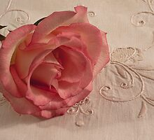 The Beauty Of Just One Rose  by Sandra Foster