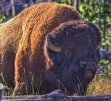 Brute of a Bison by JamesA1