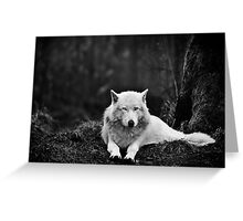 Dark Wolf Greeting Card