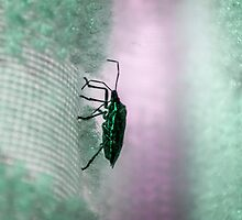 Green Stink Bug by Roses1973