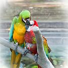 Parrots by julie08