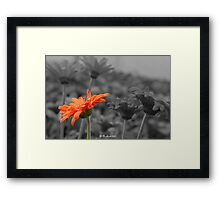 Different  - A Selective Colour Daisy Framed Print