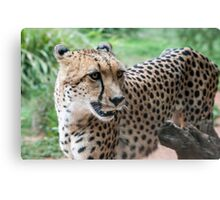 Praying For Prey Canvas Print