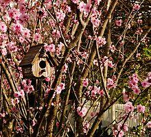 Birdhouse in the Flowering Plum Tree by Gabrielle  Lees