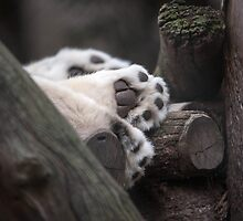 Paws For a Nap by Ray Warren