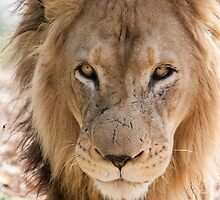 Big Cats by Ray Warren