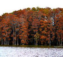 Autumn Colors by talprofit