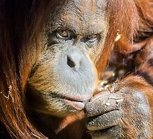 Just Thinking by Ray Warren