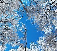 Snowy Winter Scene by Michael Shake