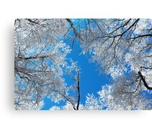 Snowy Winter Scene Canvas Print
