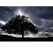 Big old black tree Photographic Print