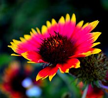 Abstract Indian Blanket by talprofit