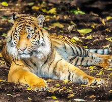 Big Cat II by Ray Warren