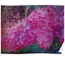 Vintage Lilacs floral garden nature art Poster