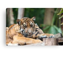 Nice Kitty Canvas Print