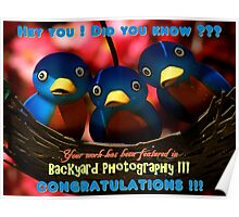 Backyard Photography Group Feature Banner Poster