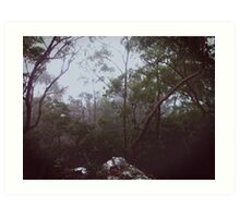 Queensland Rainforest Art Print